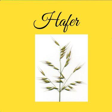 Unser Getreide - Hafer