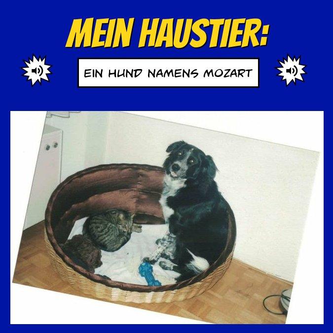 Mein(e) Haustier(e)