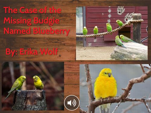 The Case of the Missing Budgie Named Blueberry
