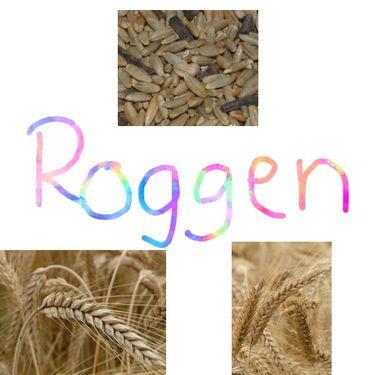 Unser Getreide - Roggen
