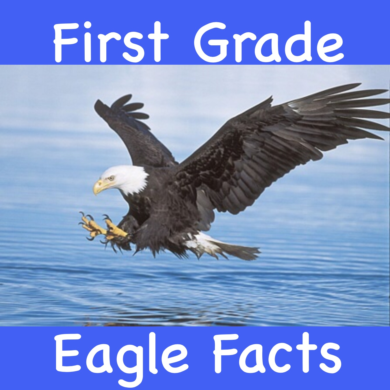 First Grade Eagle Facts