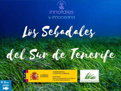 Los sebadales del Sur de Tenerife