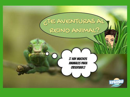 LOS SERES VIVOS - EL REINO ANIMAL