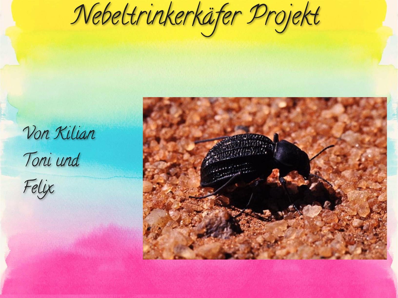 Nebeltrinkerkäfer - Wandfarbe