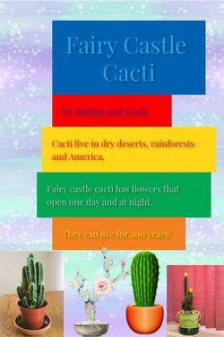 Fairy Castle Cacti