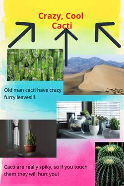 Crazy, Cool Cacti
