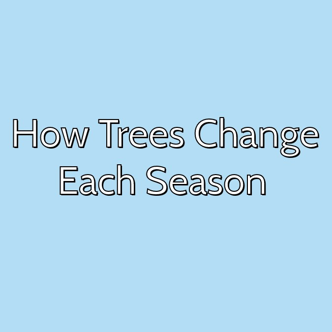 How Trees Change Each Season