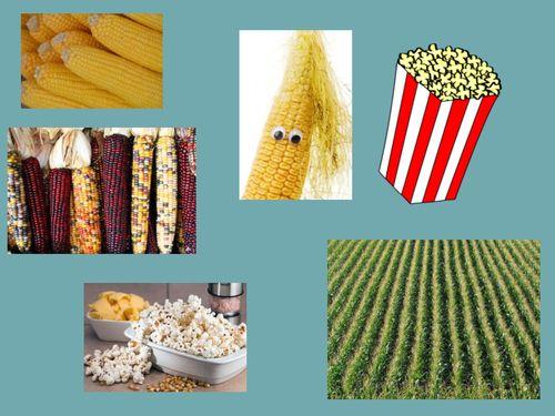 Unser Getreide - Mais