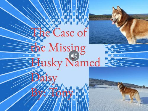 The Case of the Missing Husky Named Daisy