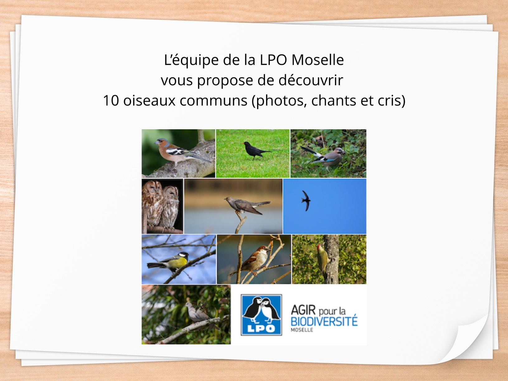 10 oiseaux communs