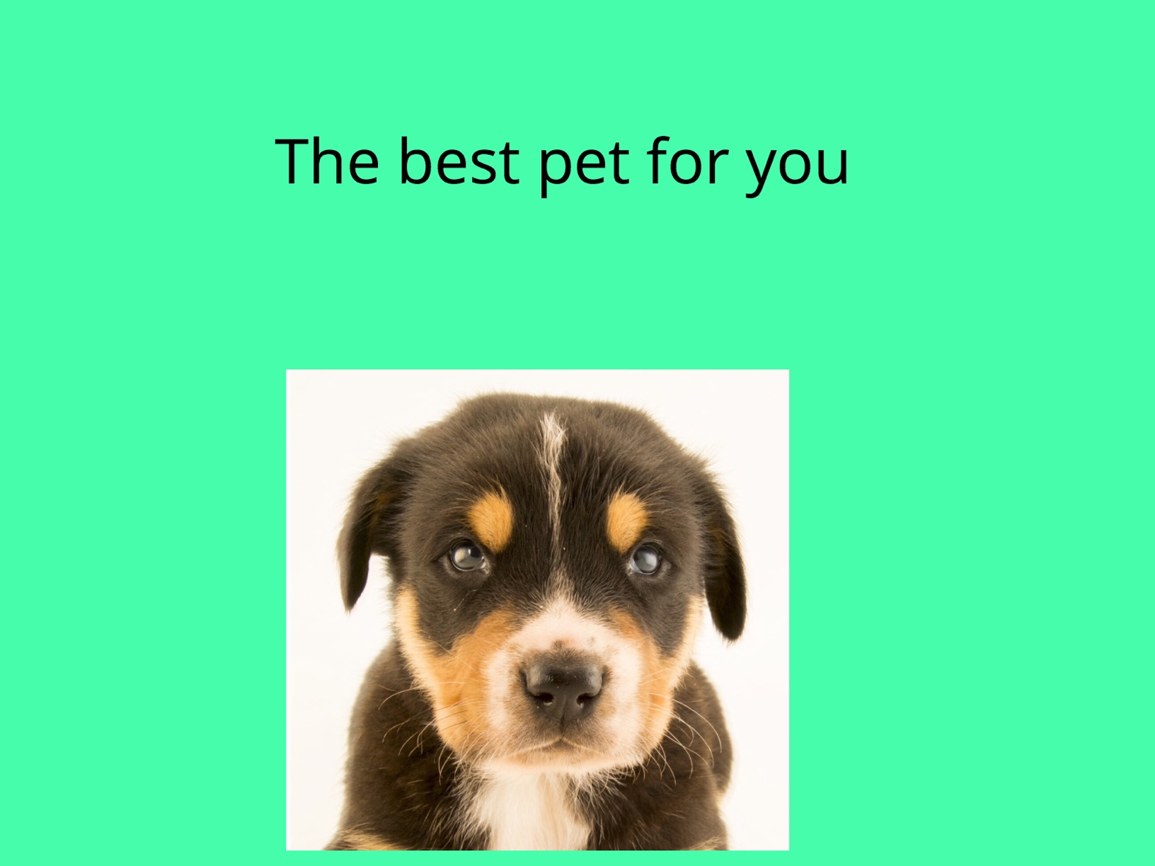 The Best Pet For You
