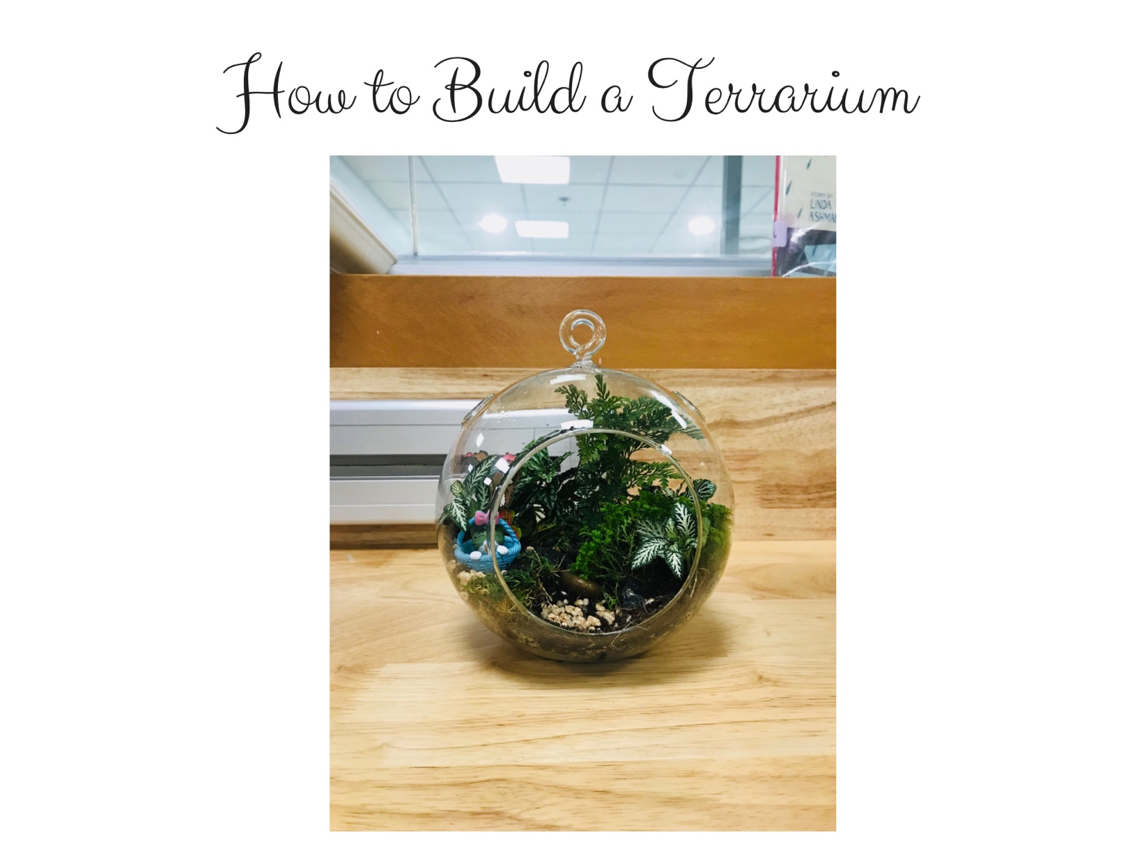 How To Build A Terrarium