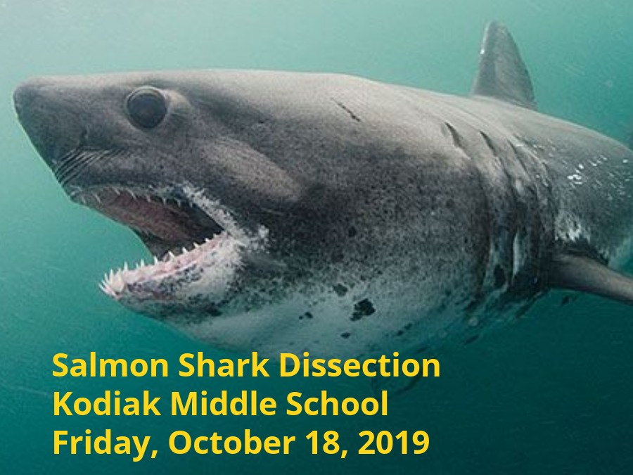 KMS Salmon Shark Research eBook
