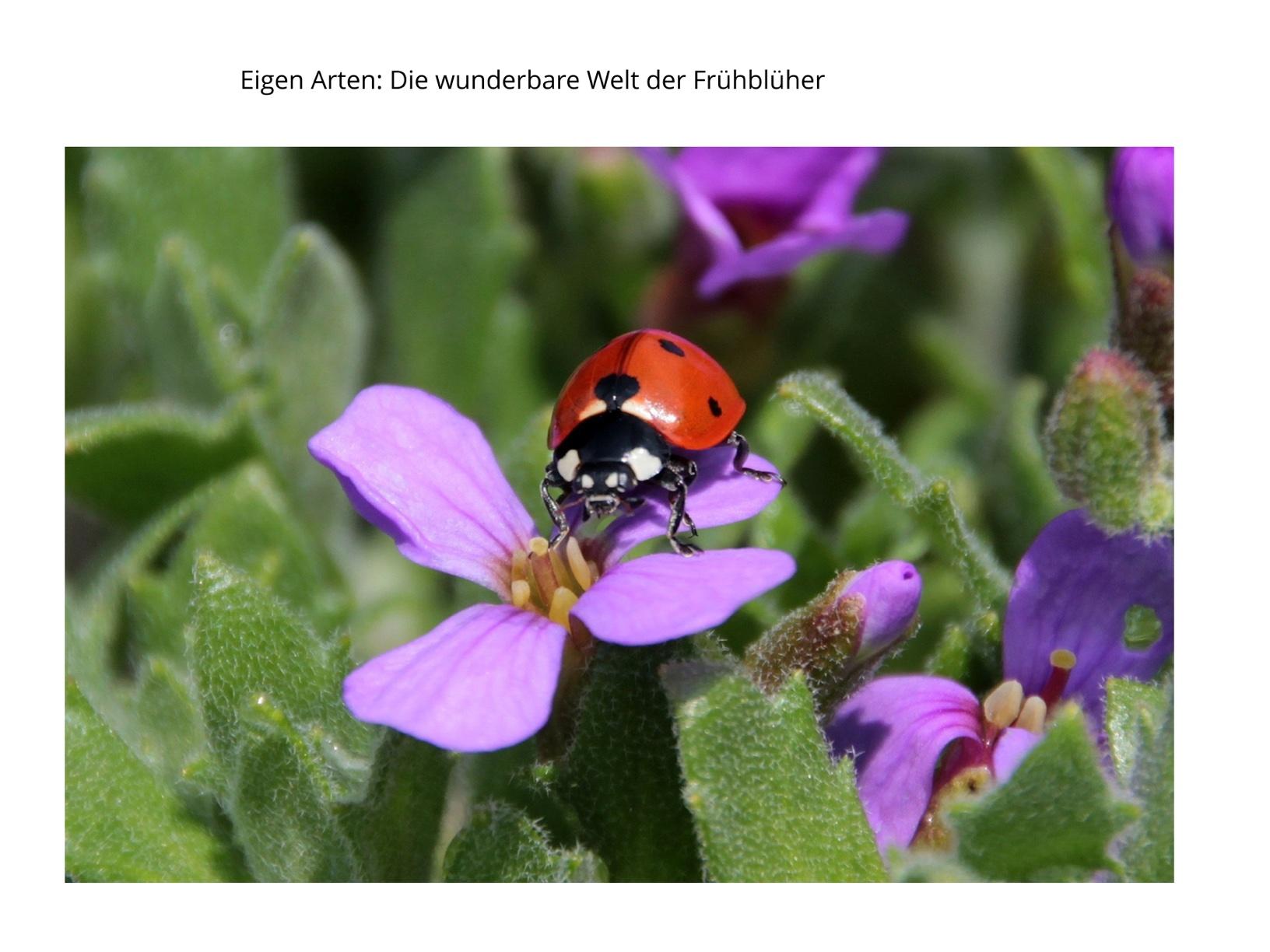 EigenArten: Die wunderbare Welt der Frühblüher