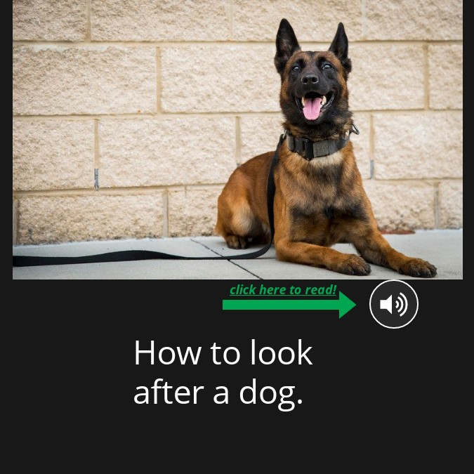 How to look after a dog